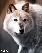 [Image: akumuwolf.jpg]