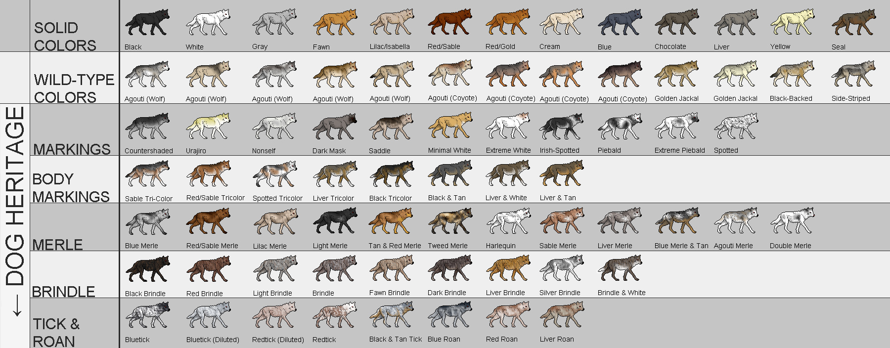 Complete Canine Colors and Coat Patterns
