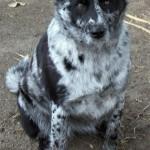 Dog Patterning