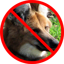 Maned Wolves and Other Non-Canis Species