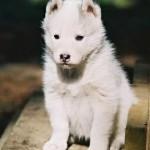 1 Month (Dog)