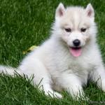 1 Month (Dog - Zima)