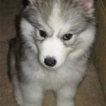 2 Months (Dog - Bailey)