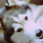 1.5 Years (Dog - Bailey)