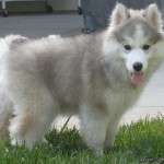 3 Months (Dog - Bailey)