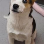 3 Months (Dog)