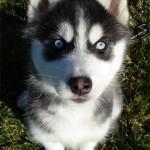 3 Months (Dog - Rave)