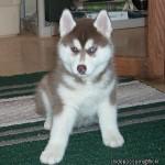 3 Months (Dog - Meeshka)