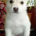 3 Weeks (Dog)