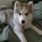 4 Months (Dog - Bailey)