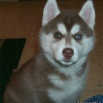4 Months (Dog - Meeshka)