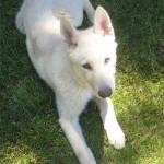 5 Months (Dog)
