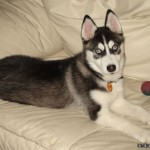 5 Months (Dog - Rave)