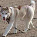 6 Months (Dog - Maverick)