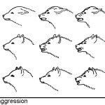 Canine Facial Expressions