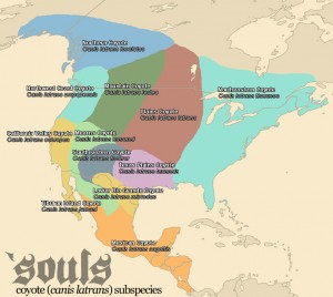 Coyote Subspecies Map