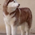1.5 Years (Dog - Meeshka)