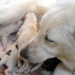 Newborns and Mom (Dog)
