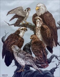 Raptor Species