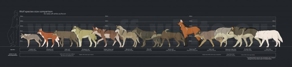 Wolf Subspecies Size Comparison Map by Tanathe at deviantART for Off-White