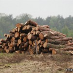 Harvested Wood